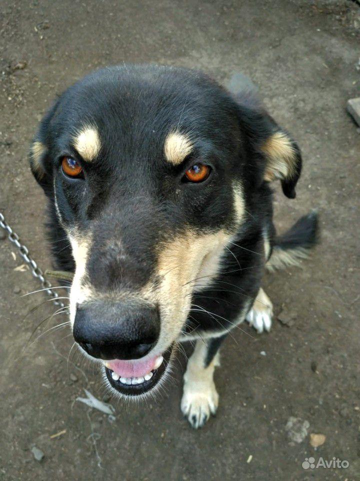 Отдам собак в Омске - фотография № 1