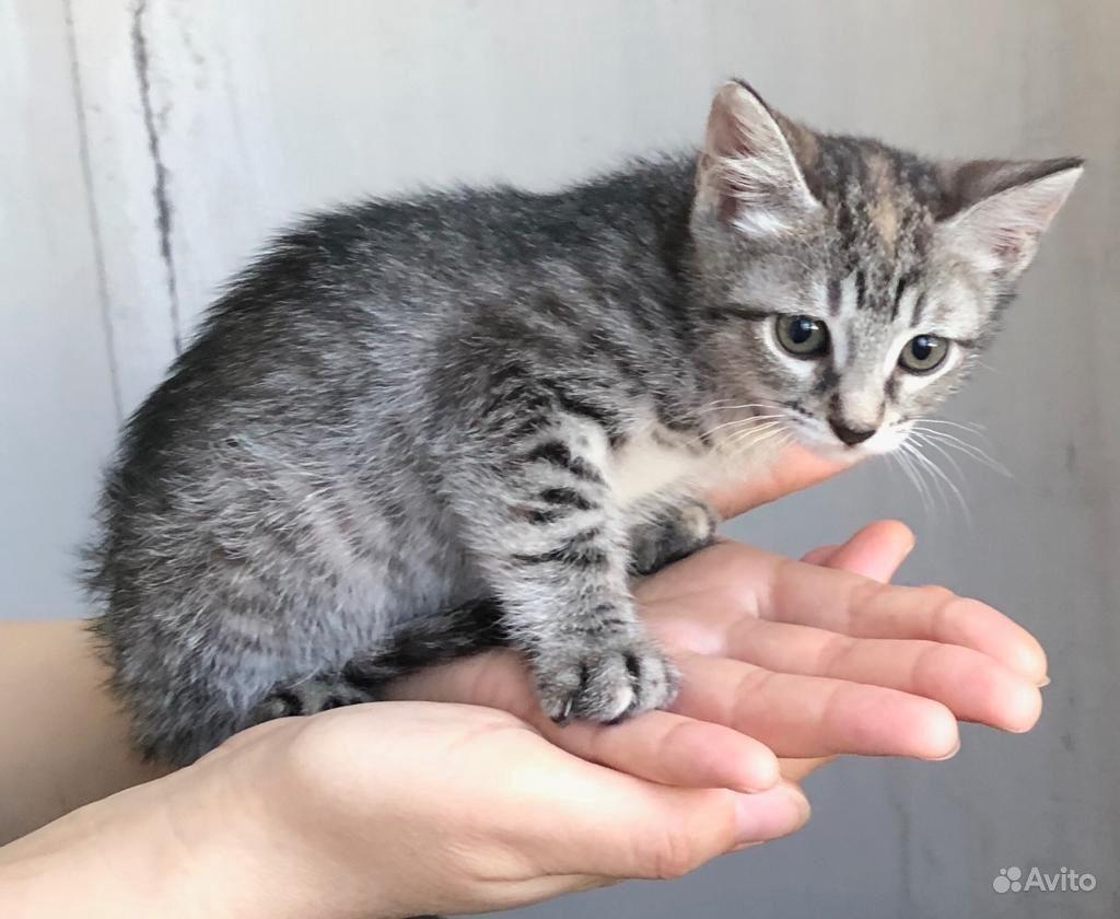 Котёнок в добрые руки - фотография № 2