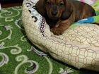Добрый щенок ищет свой дом