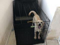 Клетка для собак крупных пород и других крупных жи
