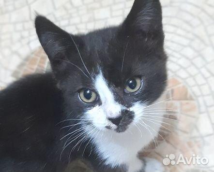 Черно-белый котята в дар