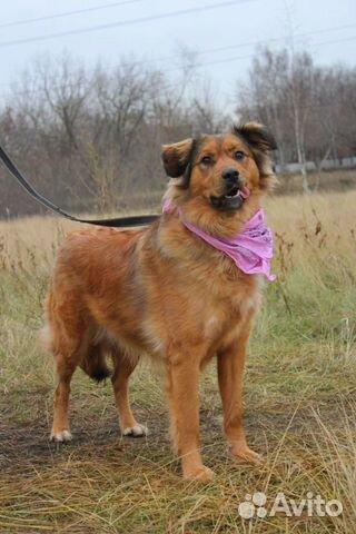 Собака в дар для семьи купить на Зозу.ру - фотография № 3