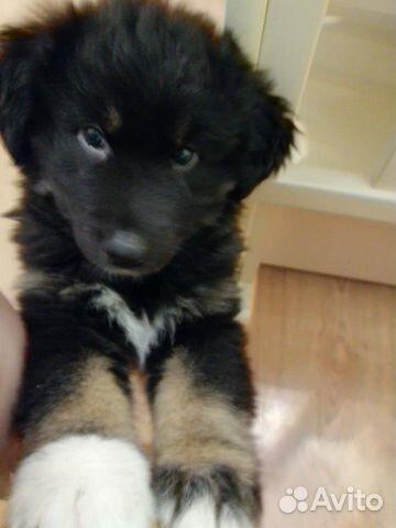 Отдам щенка в хорошие руки купить на Зозу.ру - фотография № 4