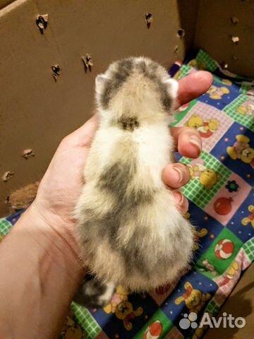 Kätzchen kaufen 2