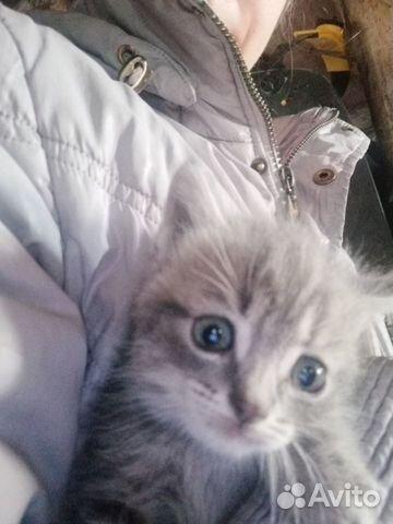 Отдам котят  89831703280 купить 2