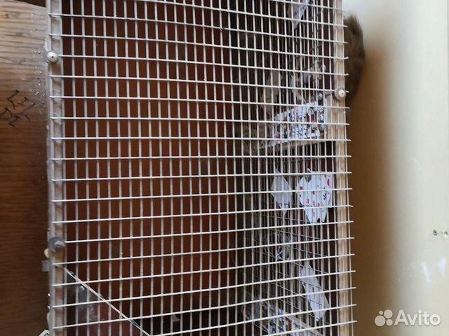 Клетка для животных  89131266246 купить 4