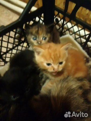 Кошка  89091702755 купить 3