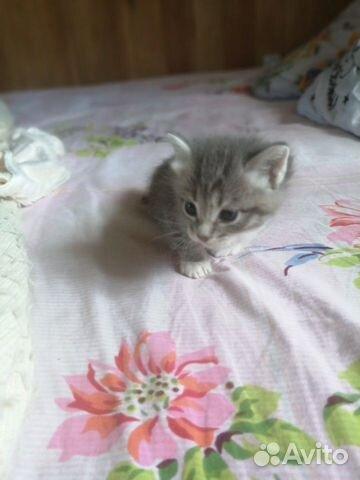 Кошка  89148760418 купить 8