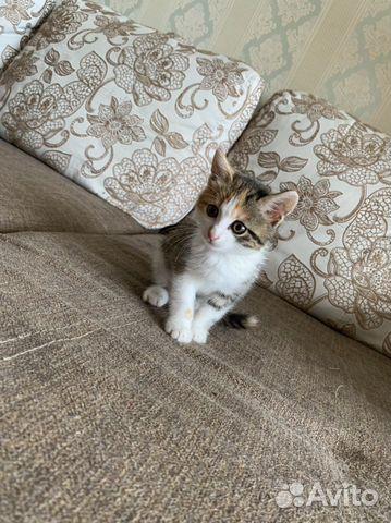 Кошка  89842775312 купить 3