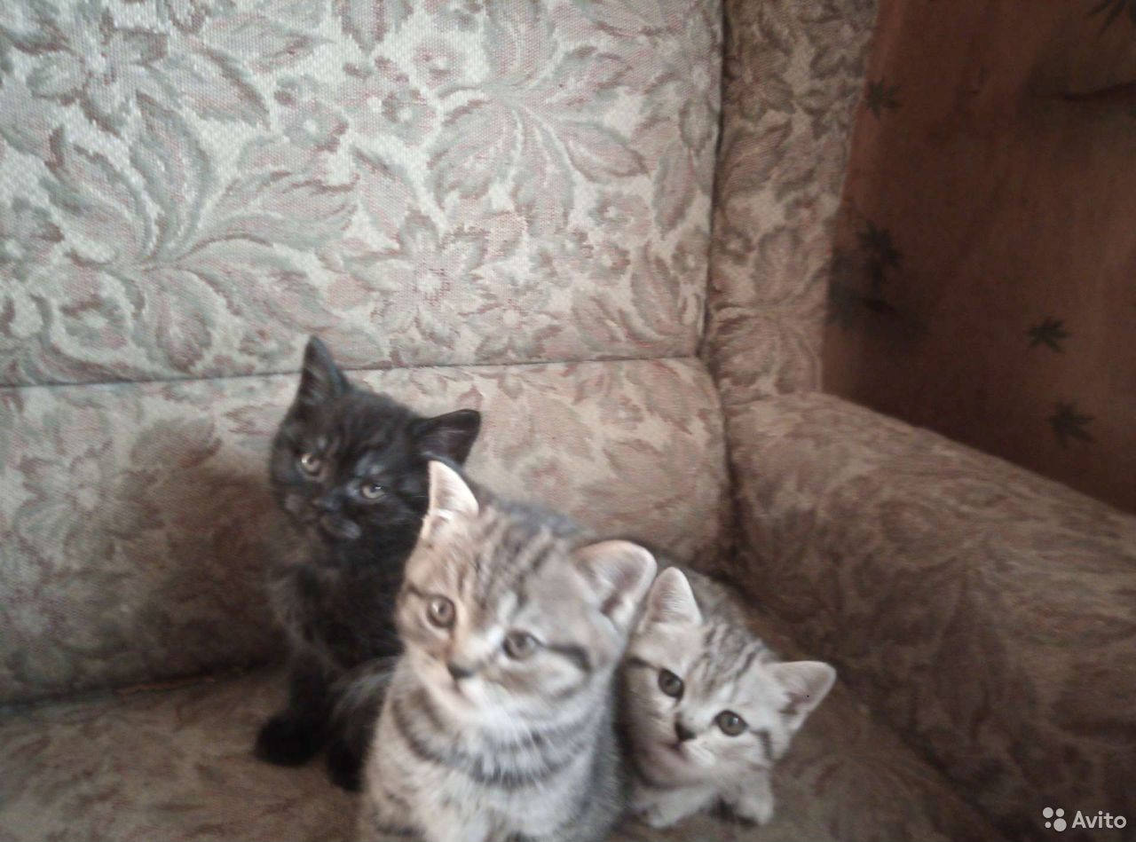 Кошка  89502432400 купить 1