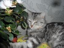 Спокойный и ласковый котик Стёпа