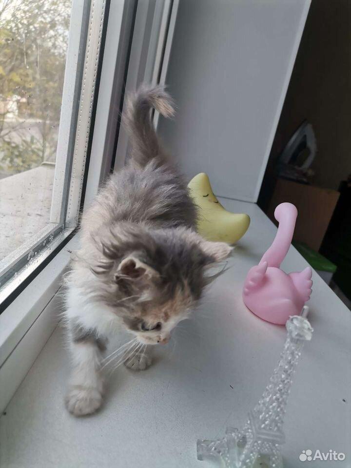 Котенок ищет дом  89997246628 купить 4