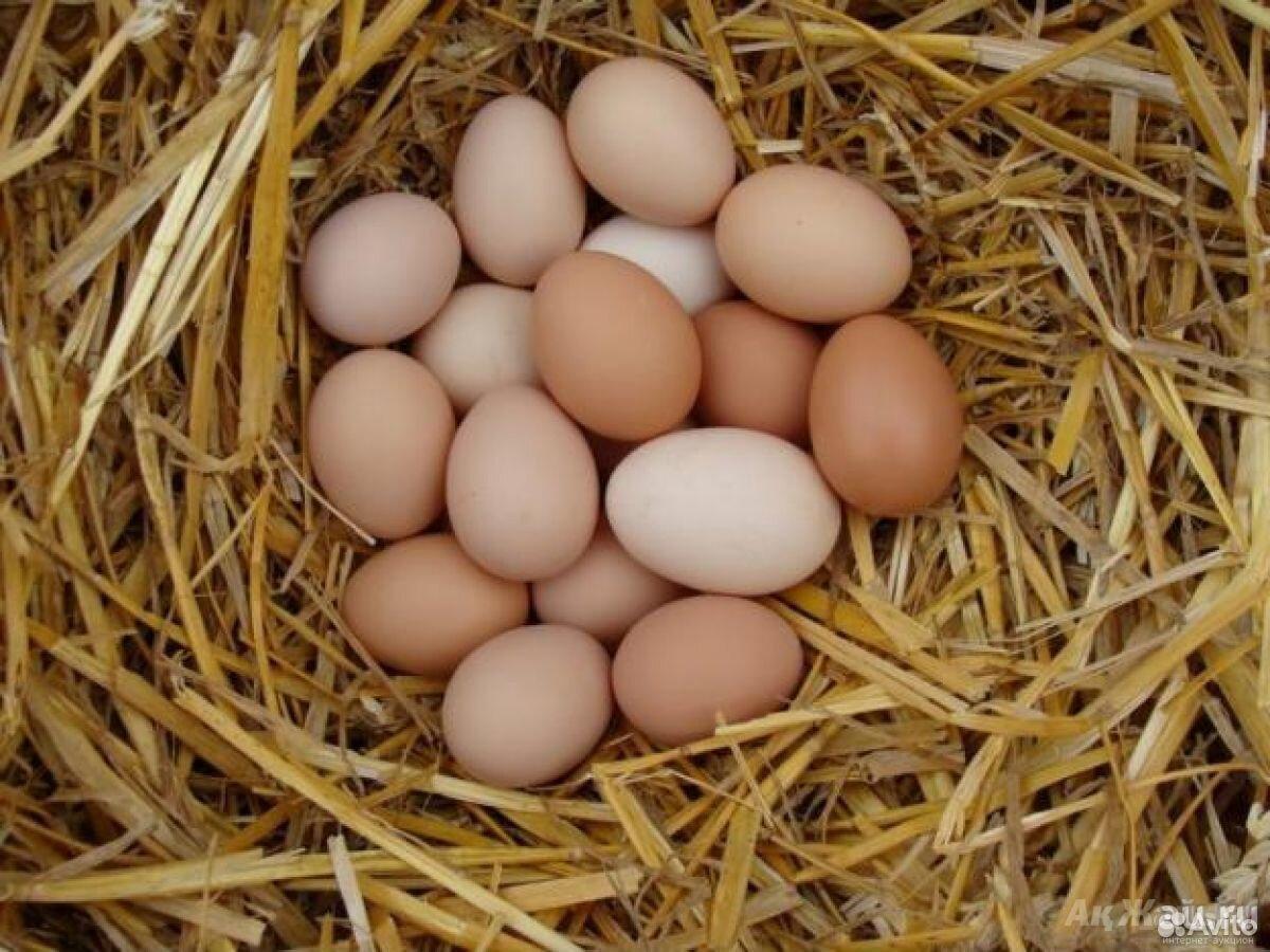 Яйцо куриное домашнее  89506602920 купить 1