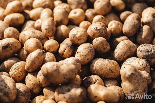 Картофель мелкий на корм животным