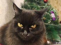 Отдам в добрые руки — Кошки в Геленджике