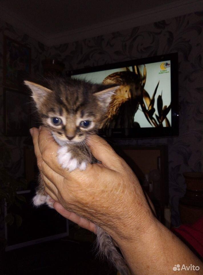 Котята в добрые руки  89040949333 купить 2