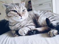 Котик Симба ищет дом